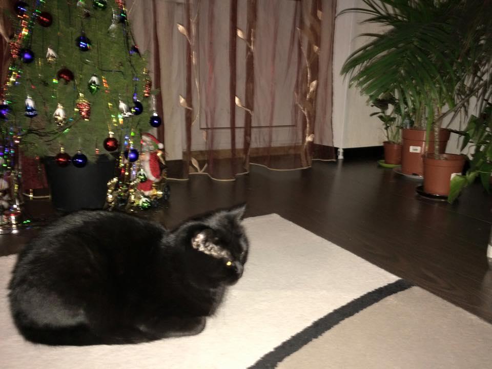 my_cat_001.jpg