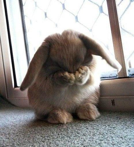 rabbite.jpg
